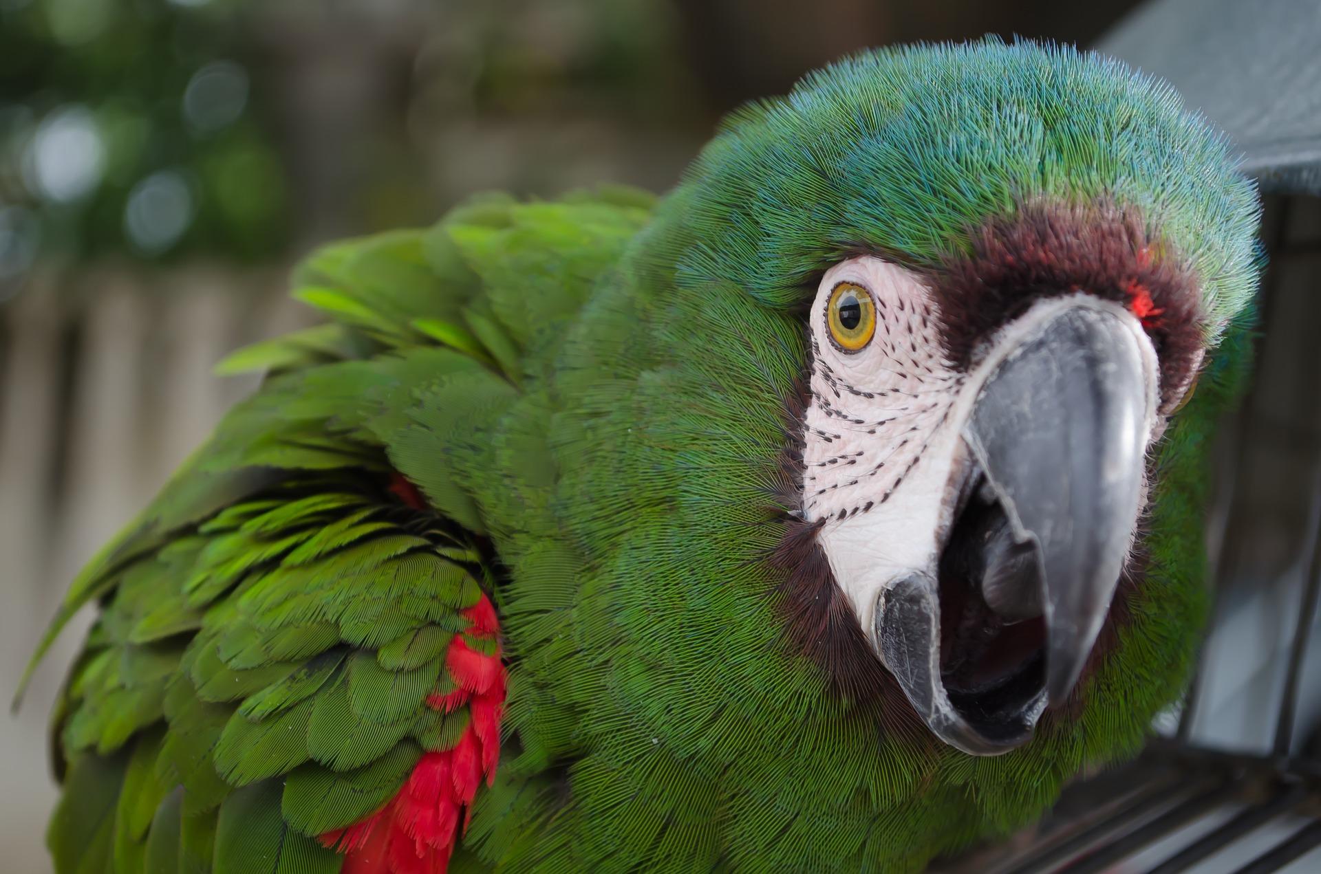 parrot-536994_1920